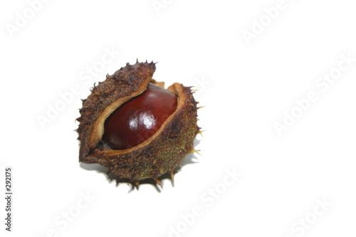 Printed kitchen splashbacks Natuur single chestnut