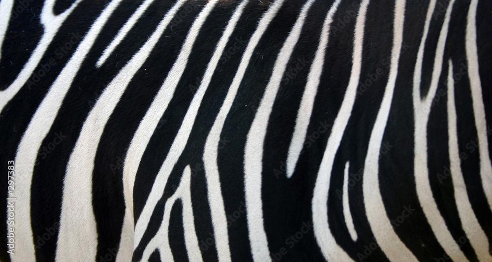 Fototapety, obrazy: zebra stripes