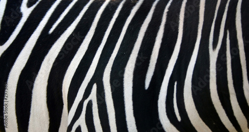 Deurstickers Zebra zebra stripes