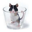 canvas print picture glass of... mouse