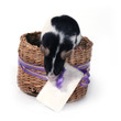 canvas print picture - mouse in a basket with a card