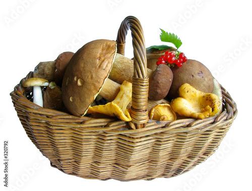 basket full of mushrooms Wallpaper Mural