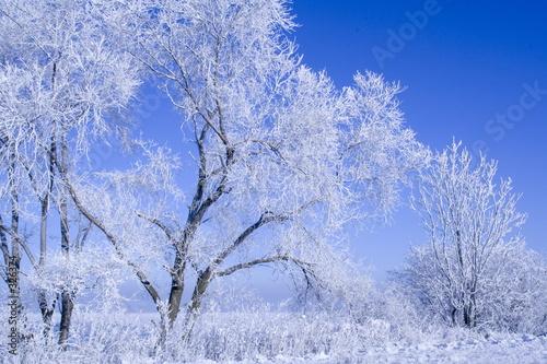 Foto-Vorhang - winter trees (von Marzanna Syncerz)