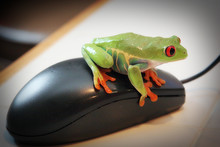 Frog On Mouse