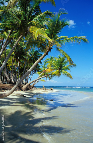Foto-Rollo - beautiful beach with palm trees (von Franz Pfluegl)