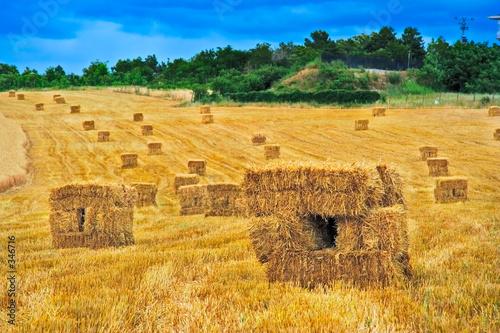 Fotografia hay bales field