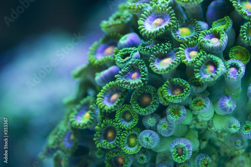 Wall Murals Under water zoa