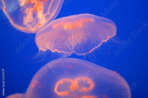 Fotografie, Tablou  jelly