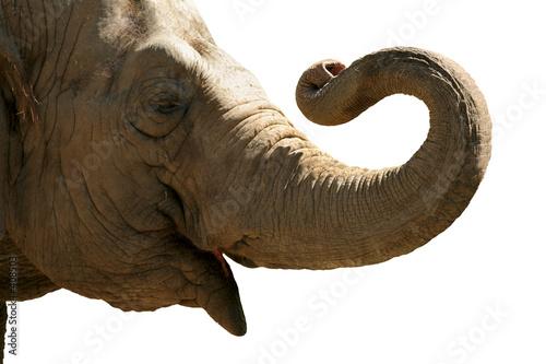 Foto-Kuscheldecke premium - elephant head isolated (von Galina Barskaya)