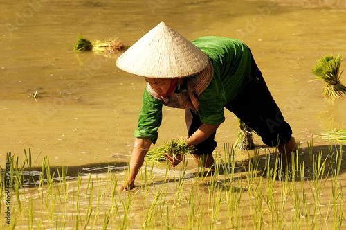 Fotografía  people of sapa in vietnam