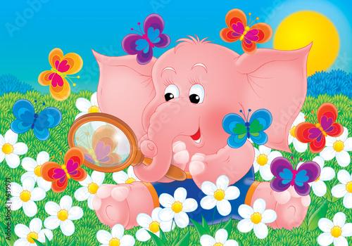 slon-i-motyl