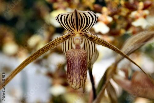 orchids beauty Canvas Print