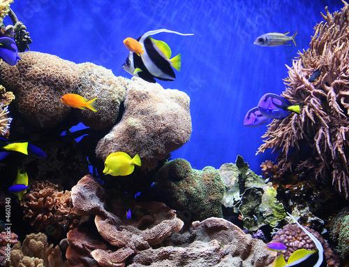 Fotografie, Obraz  tropical fish
