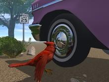Vogel Verliebt Sich In Sein Spiegelbild