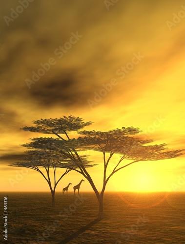 Foto-Stoff - abendstimmung in afrika (von Nicole Steinbichler)