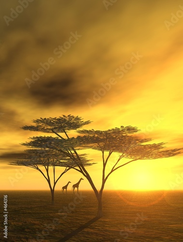 Foto-Leinwand - abendstimmung in afrika