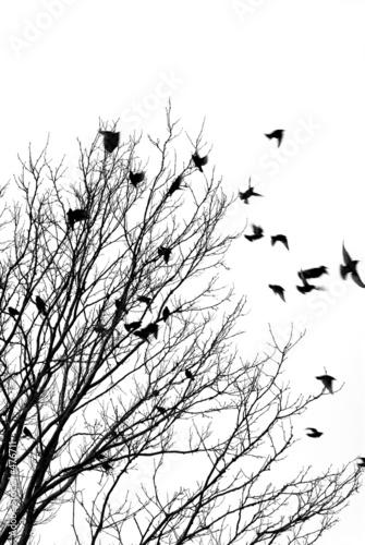 Photo sur Toile Oiseaux sur arbre flying birds