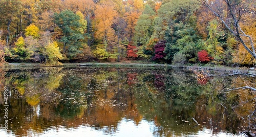 Deurstickers Herfst fall in westchester, ny