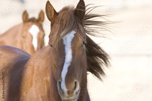 Foto-Schiebevorhang (ohne Schiene) - horses (von Sly)