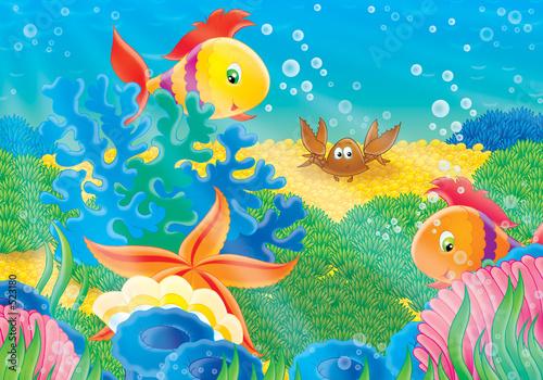 rafa-koralowa