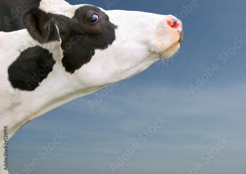 Poster de jardin Vache tête de vache