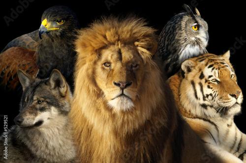 Foto-Schiebevorhang (ohne Schiene) - animaux (von Nicolas delafraye)