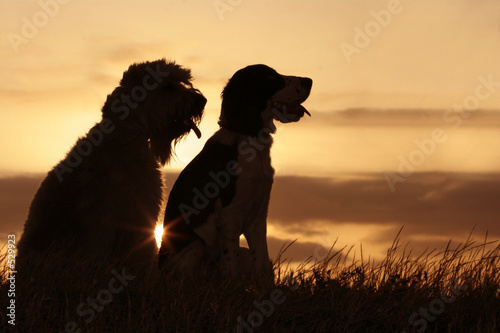 Photo  dog friends at sunset