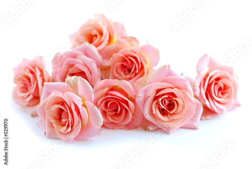 Photo  pink roses on white