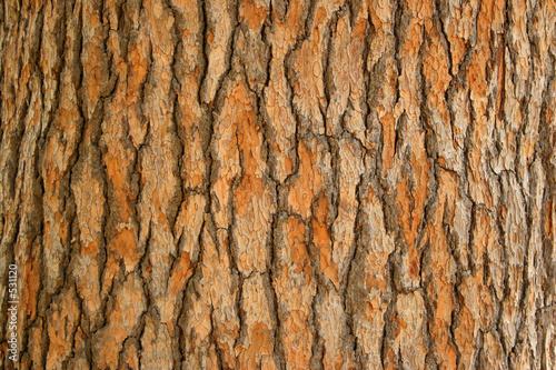 Photo bark of a tree