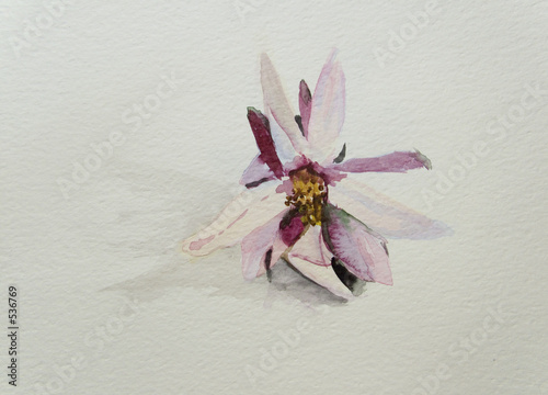 beautiful  flower  on white background-my original