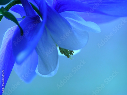 blue spring flower - 544375