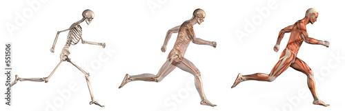 anatomical overlays 1 Fototapeta