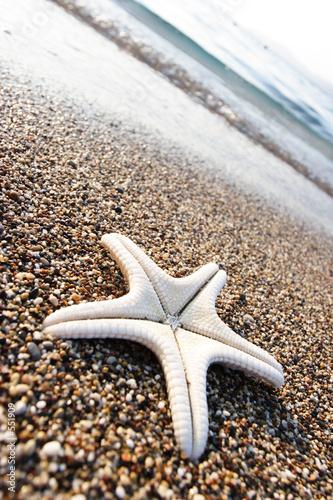 Foto-Schiebegardine Komplettsystem - star fish