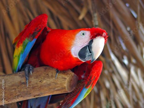 Tuinposter Papegaai ave tropical