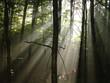 canvas print picture - aube en forêt