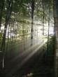 canvas print picture - lumière en forêt
