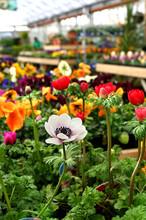 Garden Centre Color