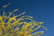 Arizona Yellow Blue