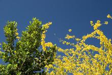 Tricolor Spring