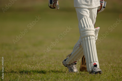 Fotografia english cricket