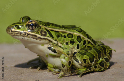 Fotografija frog