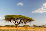 Fototapeta Sawanna - african landscape