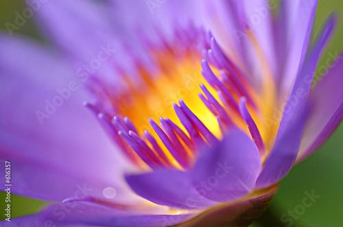 Deurstickers Waterlelies water lily