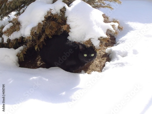 Photo chatte en hiver