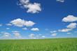 Leinwandbild Motiv springtime meadow
