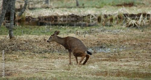 Fotografija deer private time