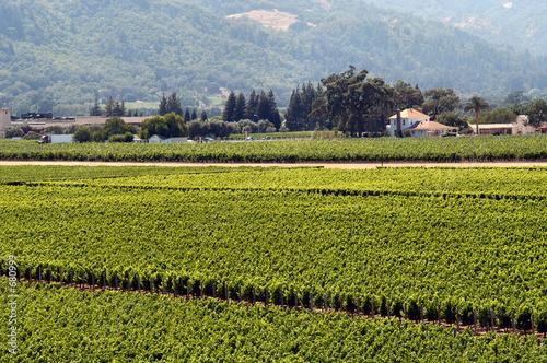 Valokuva  californian vineyard