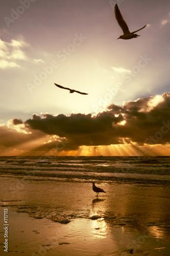 Foto-Schiebevorhang (ohne Schiene) - golden sunset colors (von Eric Gevaert)