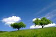 canvas print picture - baum mit himmel 3