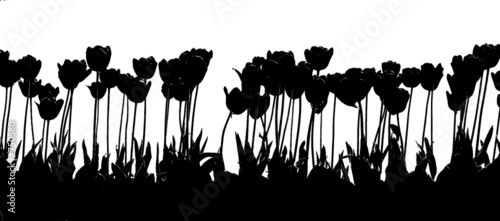 Poster Floral black and white tulip 2color black